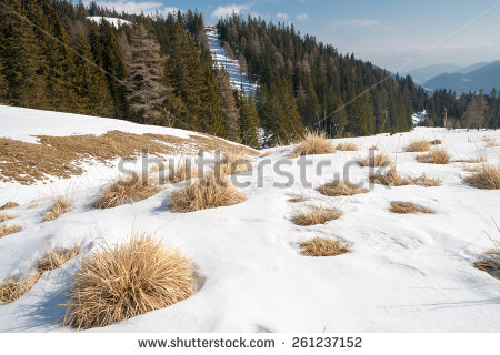 stock-photo-alpine-landscape-with-dried-grass-and-snow-261237152