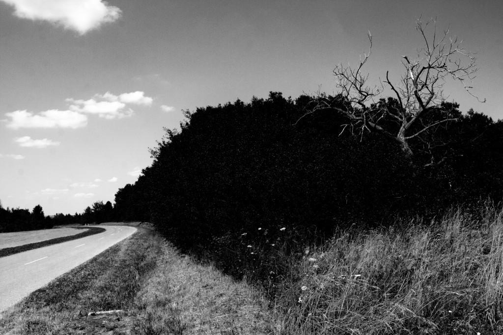 koczur richárd vancsó zoltán fotótábor orfű 1
