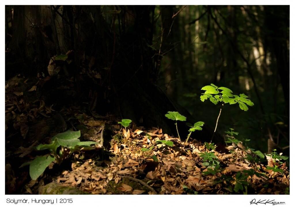 túrázás és fotózás kapcsolata stockfotó növények erdő